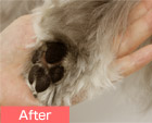 Esth&eacute Paw Pad Care Treatment image